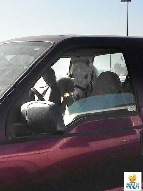 голова лошади в машине