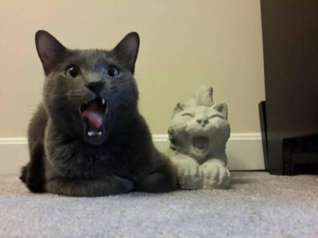 кот и статуэтка