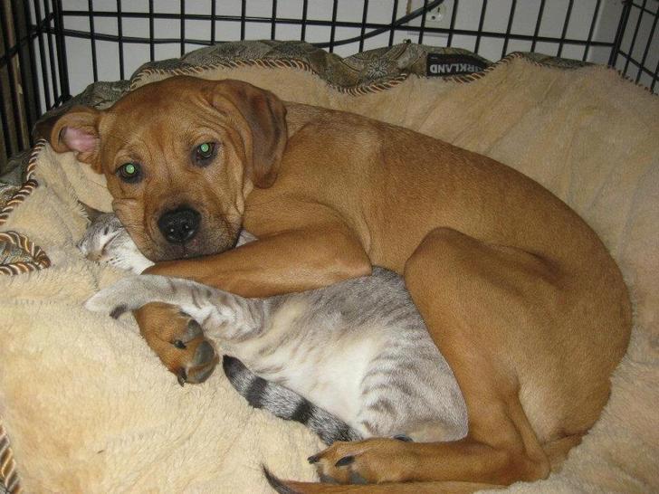 кот и пес обнимаются