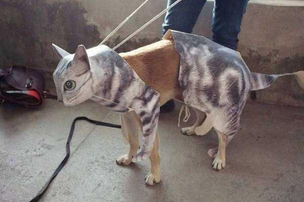 собака в костюме кота