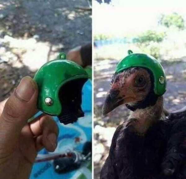птица в зеленом шлеме