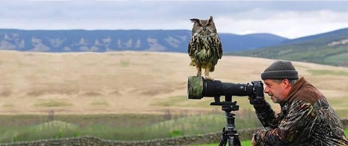 пугач сидит на камере фотографа