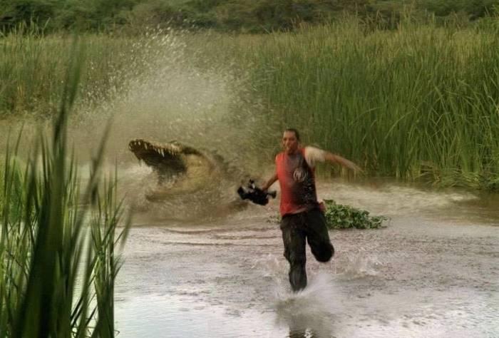 фотограф убегает от аллигатора