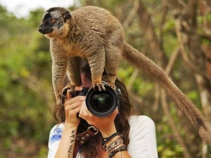 лемур на голове у фотографа