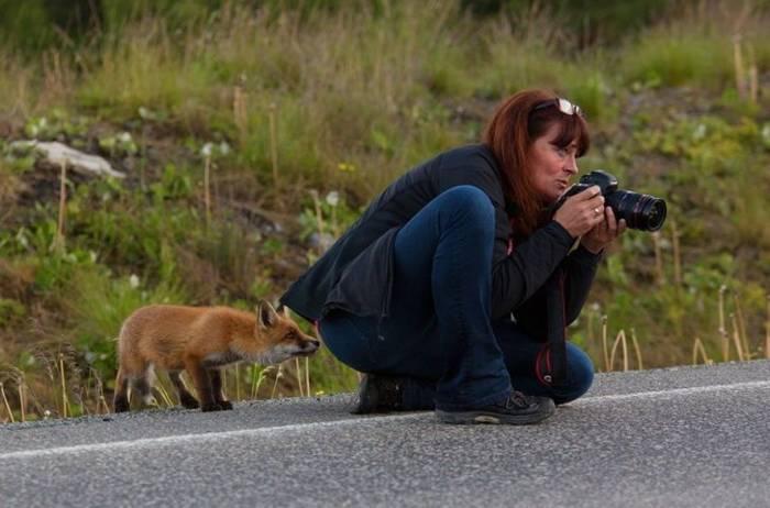 женщина фотограф и лисенок