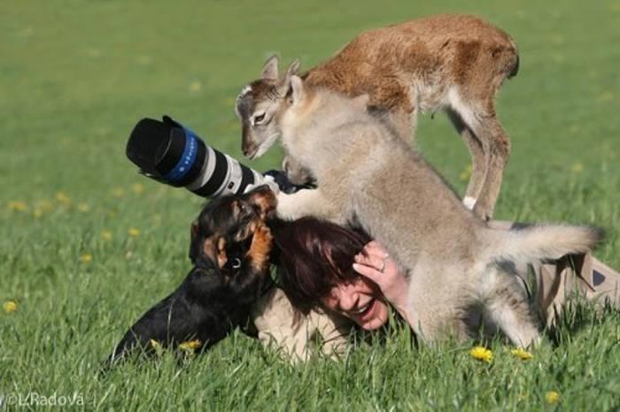 животные окружили фотографа