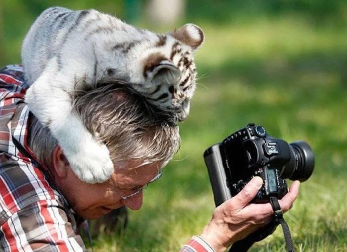 тигренок на голове у фотографа