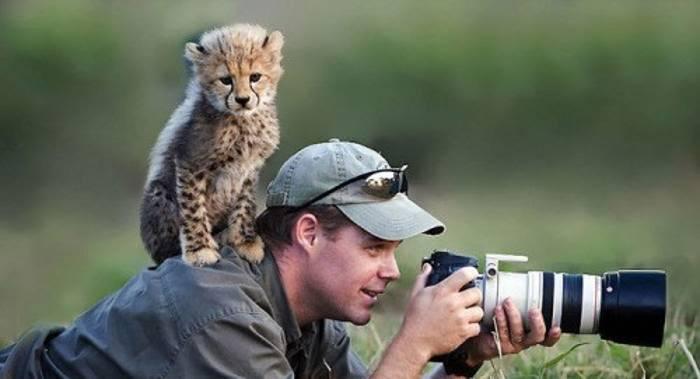 детеныш гепарда сидит на спине у фотографа