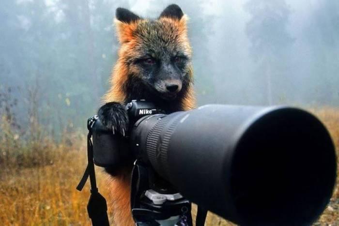 лиса с камерой