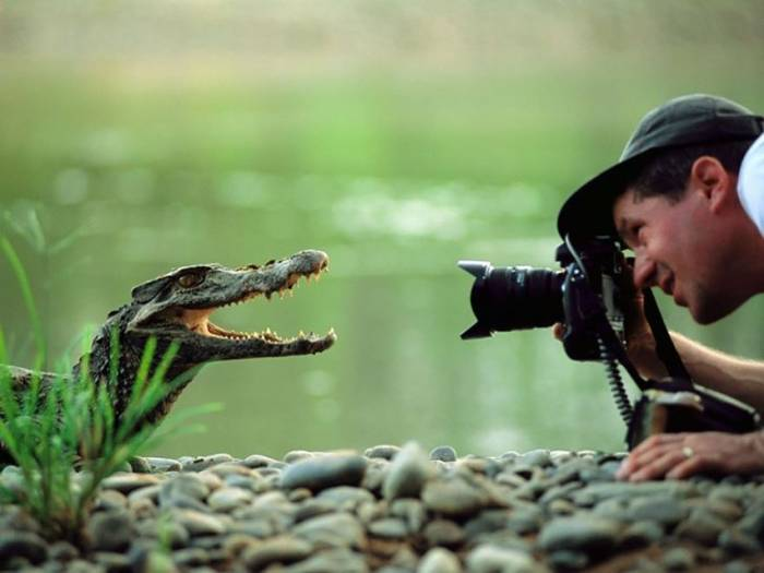 фотограф и крокодил