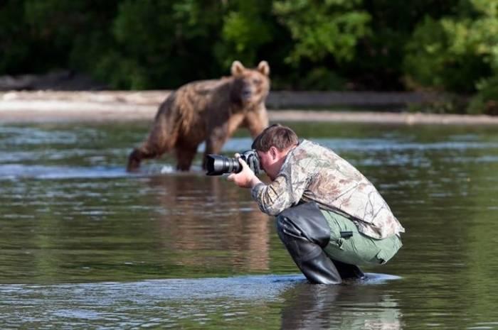 медведь и фотограф