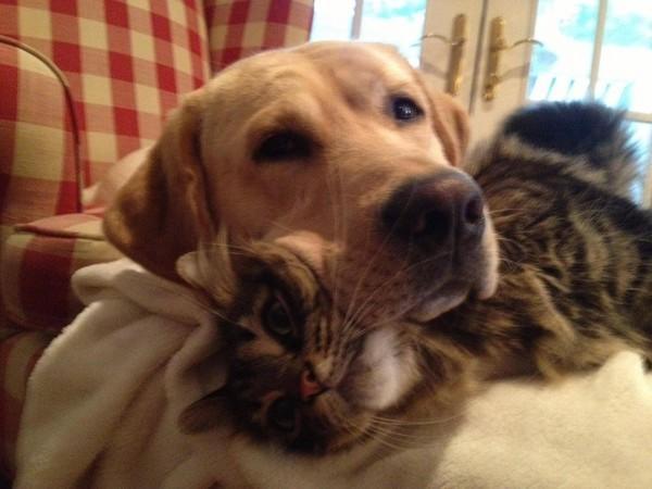 кот и собака лежат вместе