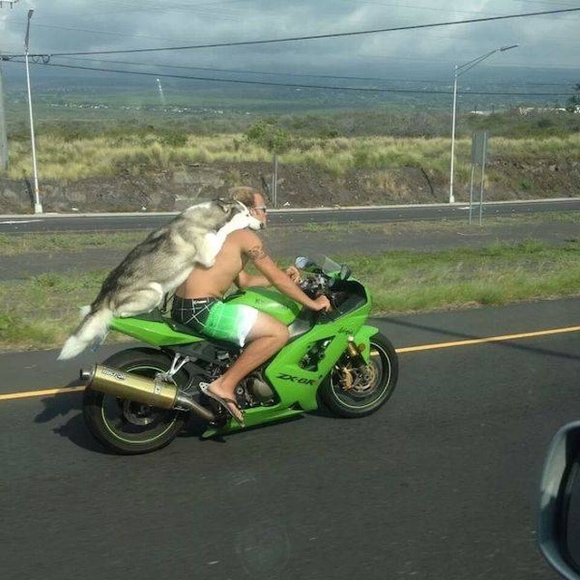 собака с мужчиной на мотоцикле