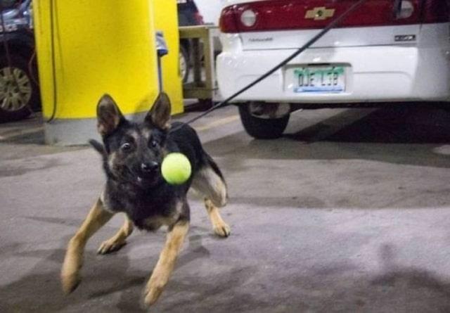 щенок ловит мяч
