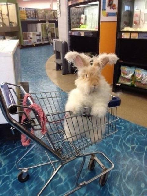пушистый заяц в магазинной тележке