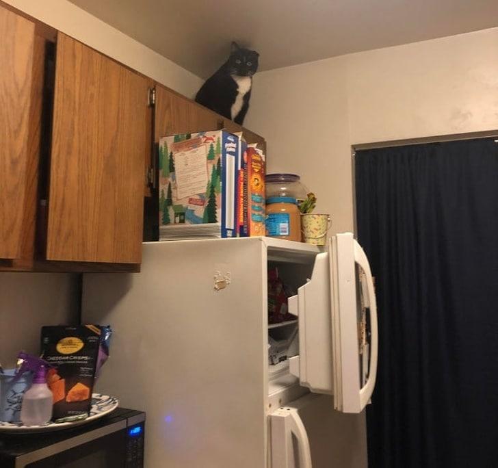 кот сидит над холодильником