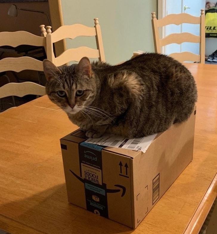 кот сидит на коробке на столе