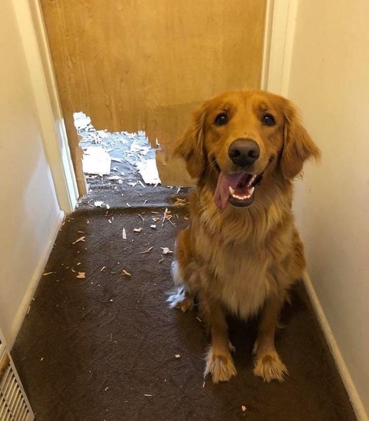 собака рядом с дверью