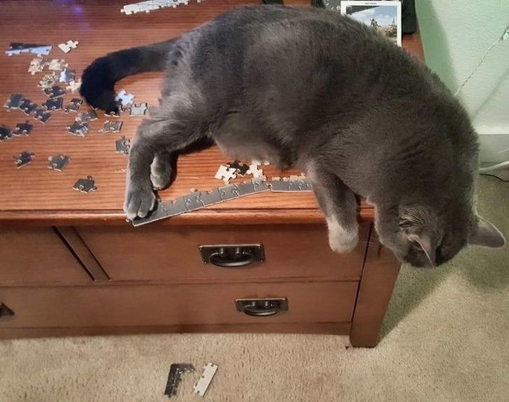 серый кот на столе