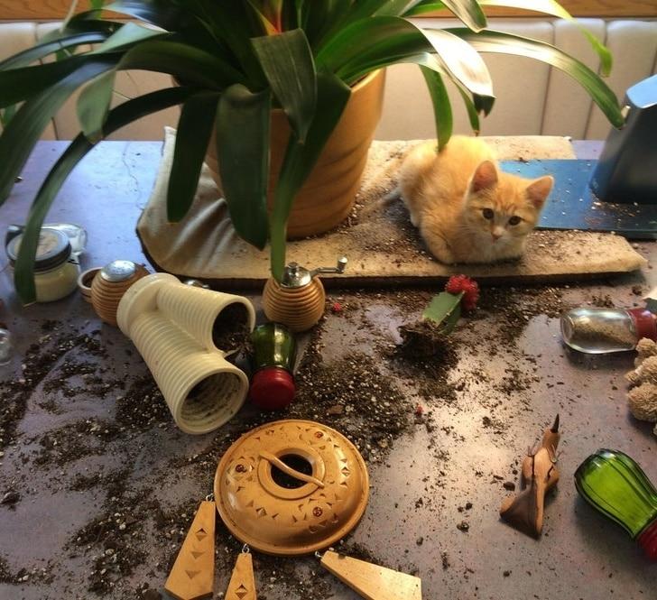 кот рассыпал землю из цветка