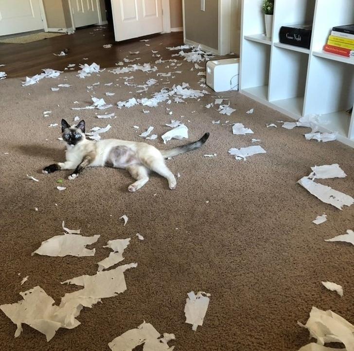 кошка лежит посреди комнаты