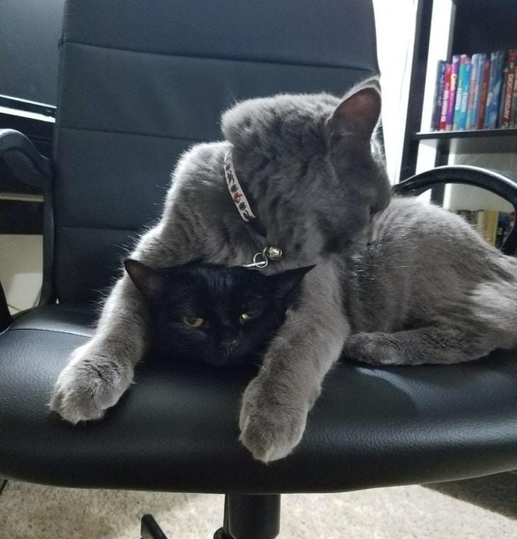 два кота в кресле