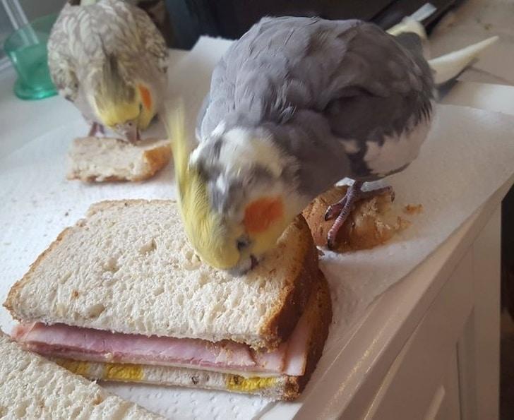 попугаи едят хлеб