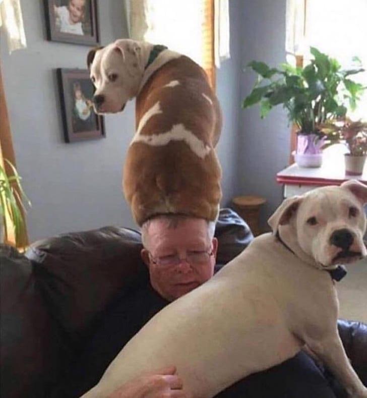 собака сидит на голове у мужчины