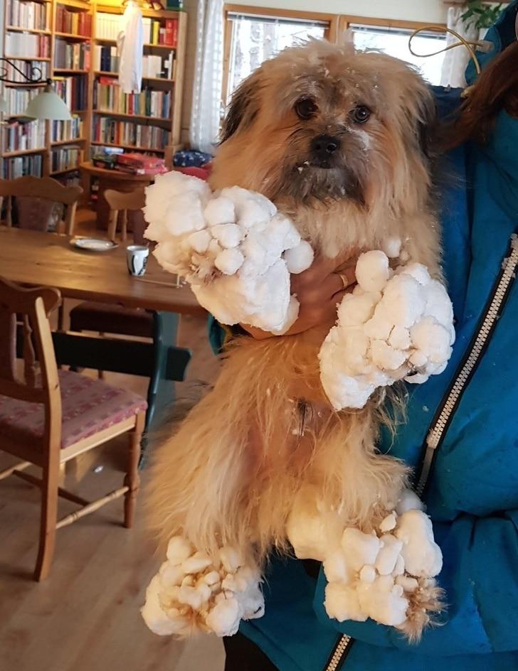 собака со снегом на лапах