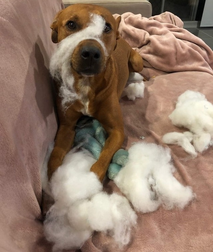 собака порвала плюшевую игрушку