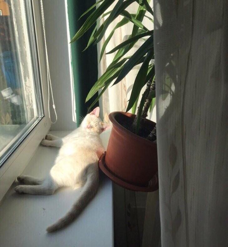 кот роняет цветок с подоконника