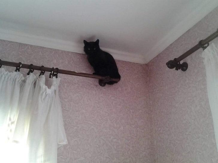 черный кот сидит на карнизе