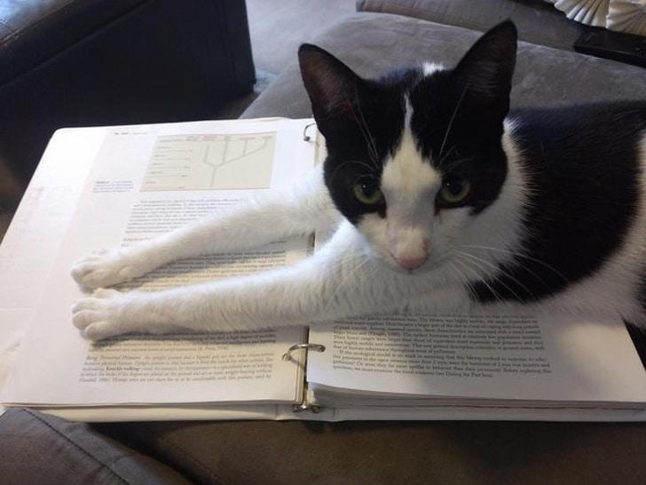 черно-белый кот лежит на книжке