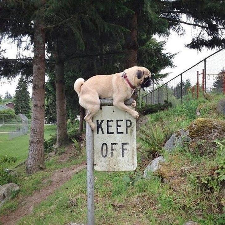 собака сидит на дорожном знаке