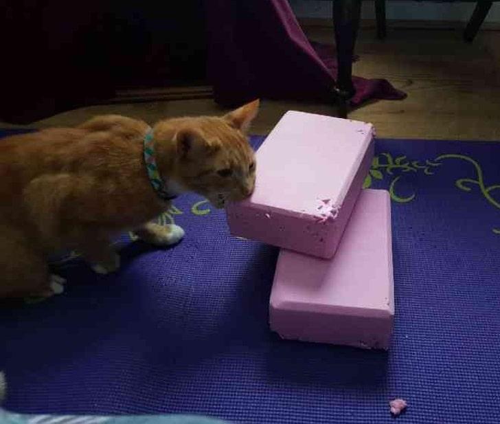 рыжий кот грызет розовые блоки