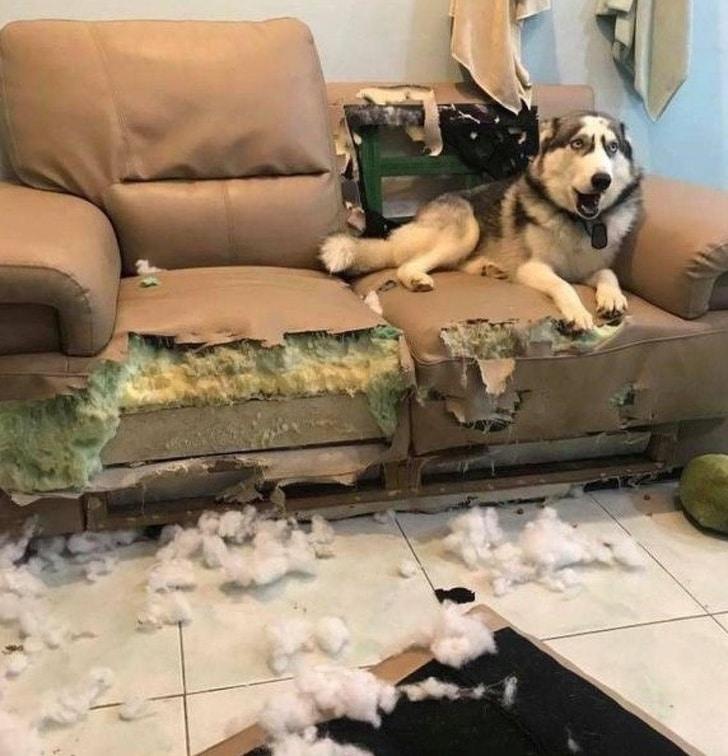 собака сидит на диване