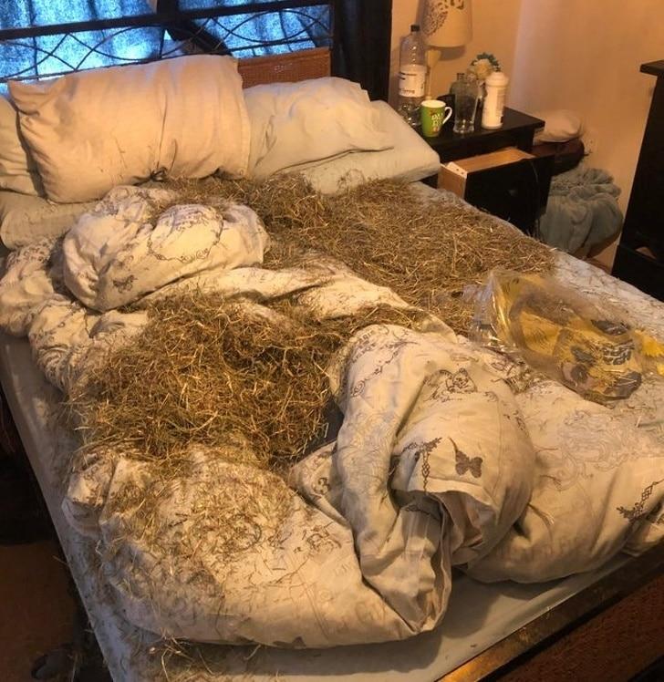 сено в постели