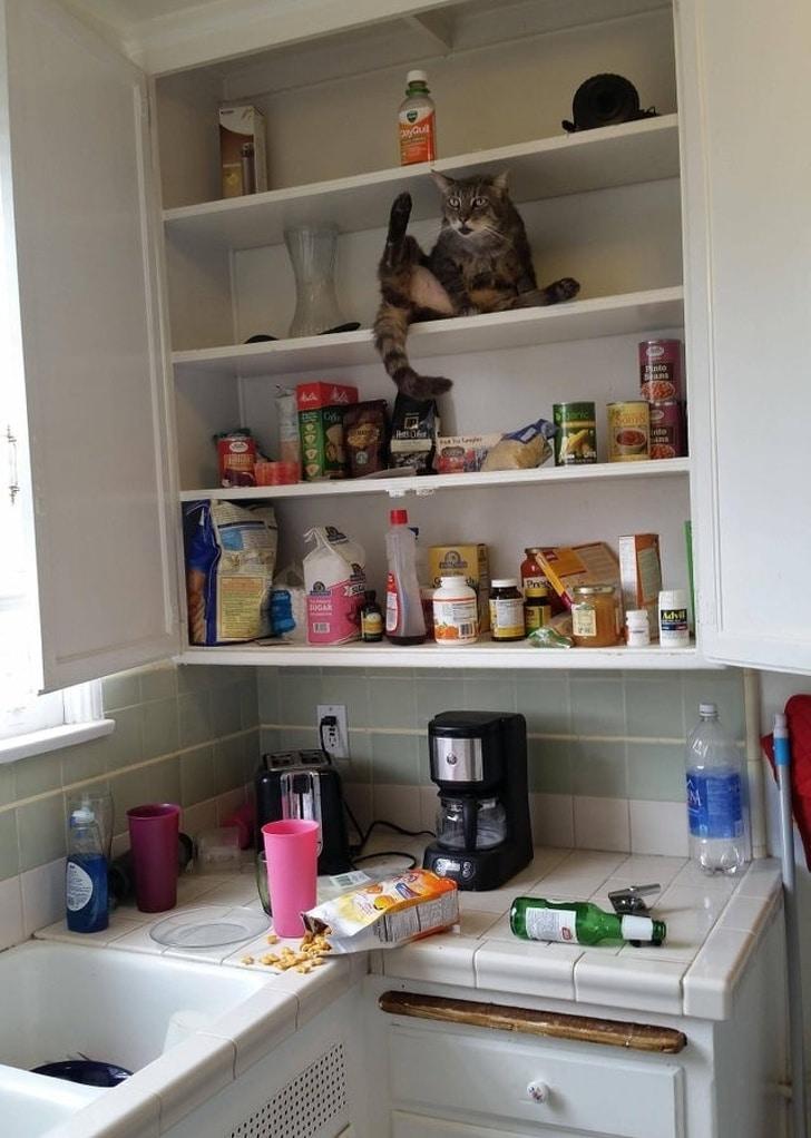 кот сидит на полке в кухне