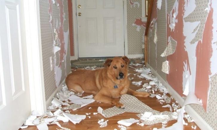 собака сидит в коридоре