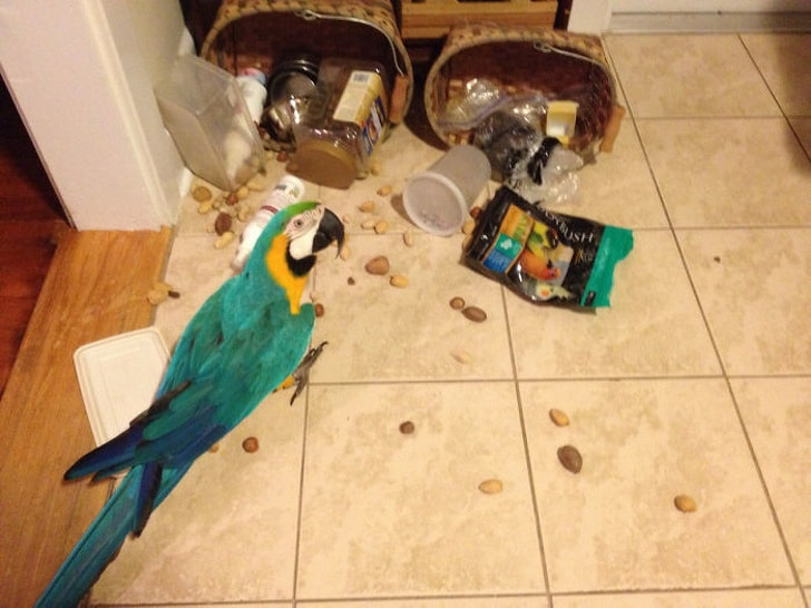 попугай сидит на полу