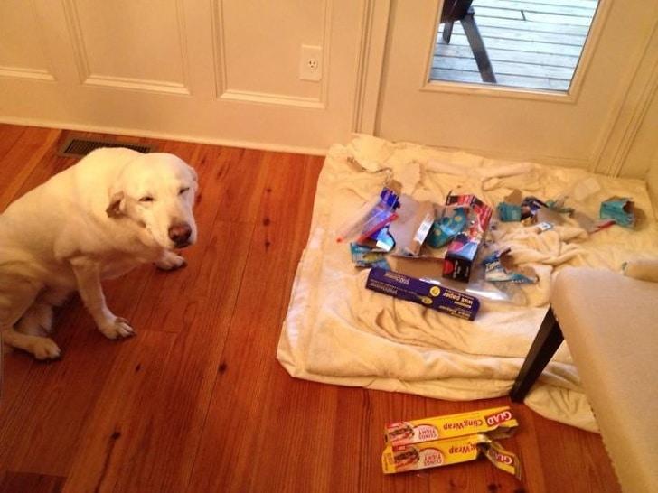 белая собака на полу