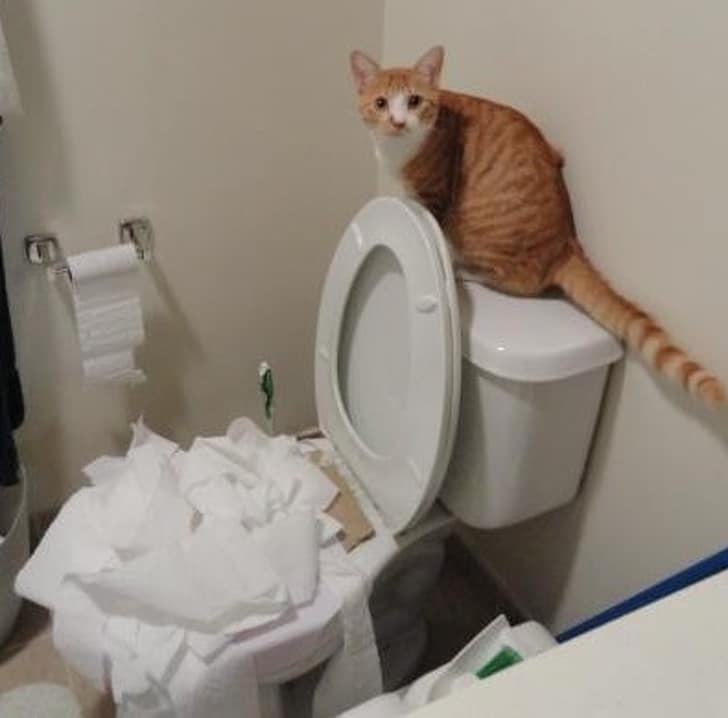рыжий кот сидит на бачке