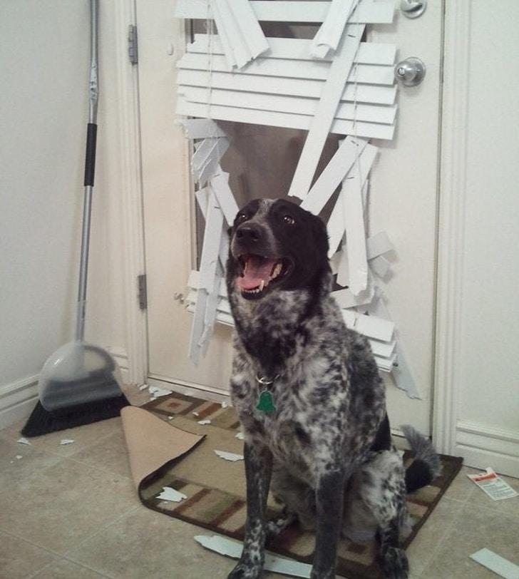 собака сидит у дверей
