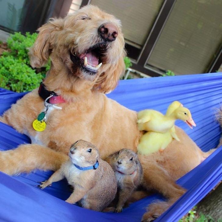 собака с кроликами и утятами