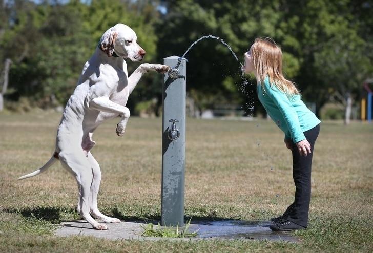 собака и девочка возле фонтанчика с водой