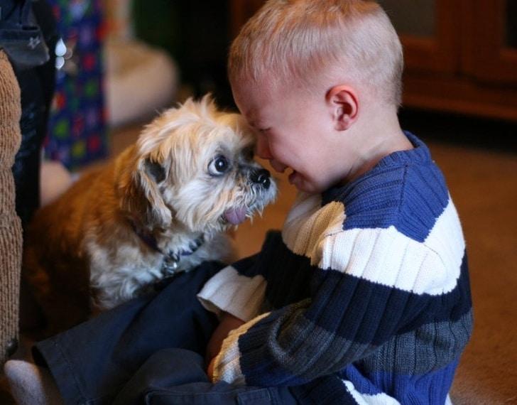 плачущий мальчик и собака