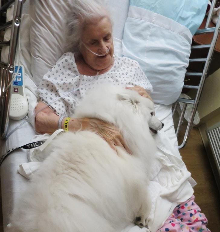 пожилая женщина в больнице с собакой