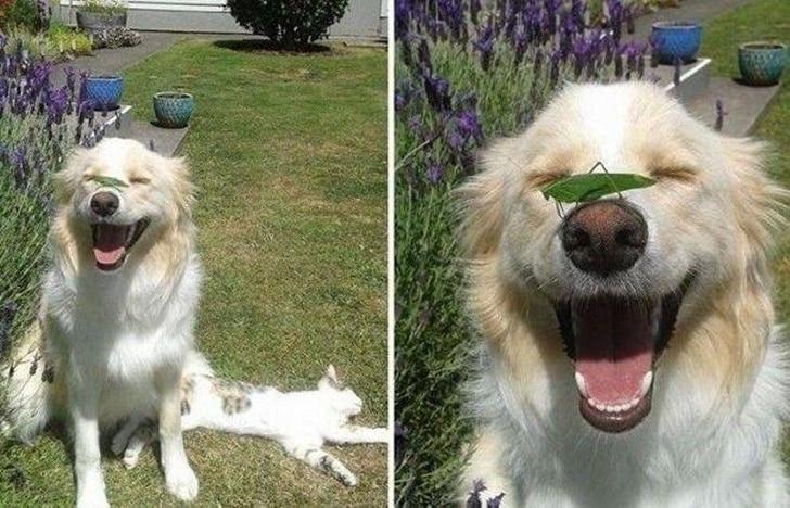 кузнечик сидит на носу у собаки