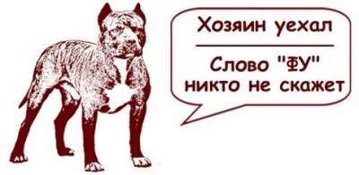1471869409_1471426318_sobaki4-1
