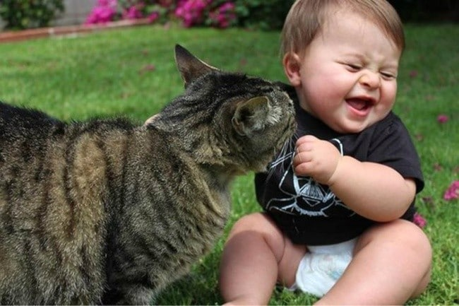 Несколько доказательств того, что коты могут быть самыми ответственными и заботливыми животными для малыша